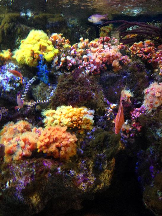 熱帯の魚たち