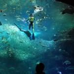新江ノ島水族館(えのすい)の3Dプロジェクションマッピング「ナイトアクアリウム」