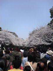 上野恩賜公園 花見