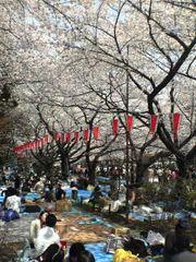 上野恩賜公園の桜 花見
